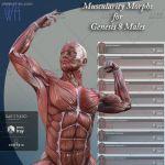 男性人体肌肉超精细解剖3D模型