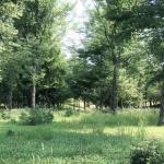 Maxtree出品树木植物3D模型Vol.5合集