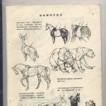 超实用基础图书动物画技法书籍杂志