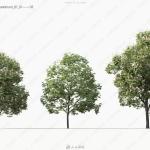Maxtree出品草木植物3D模型Vol.11合集
