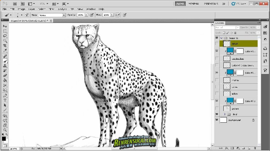 《Photoshop绘制动物解剖高级教程》Digital-Tutors Fundamentals of Drawing Animal Anatomy
