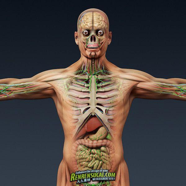 《人类男性和女性完整的解剖》Turbosquid - Human Male and Female Complete Anatomy