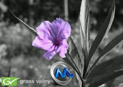 《实时媒体数字编辑系统v6.52升级包》Grass Valley Canopus Edius 6.52 Update