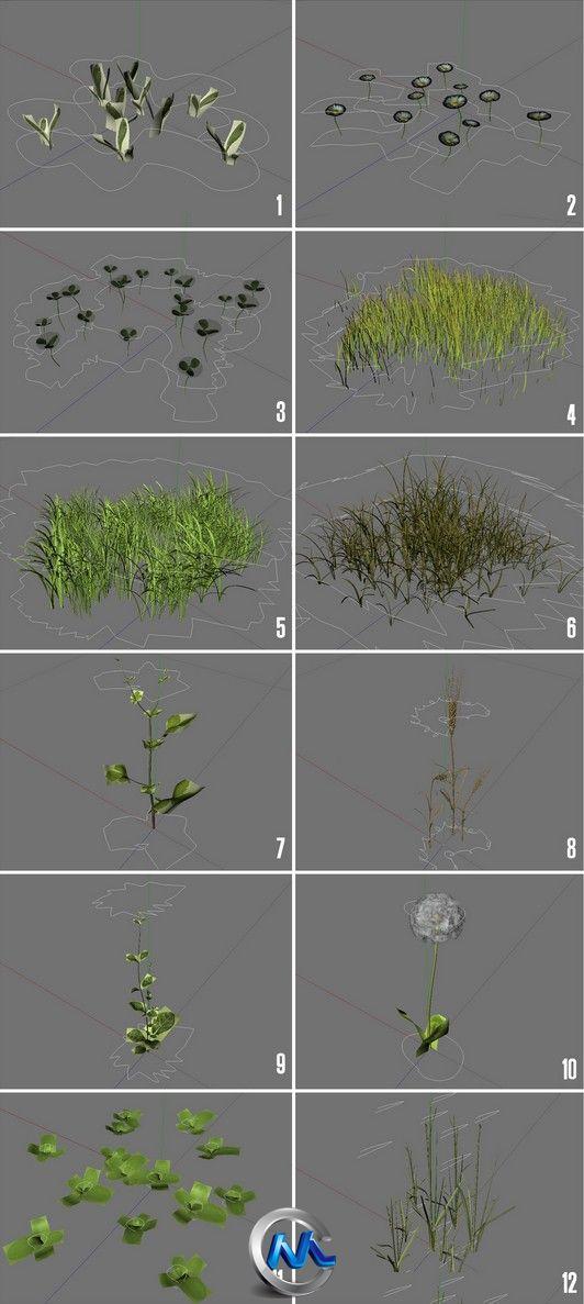 《地面草木植物3D模型合辑》ExorbitArt Real Ground Plants V1.1