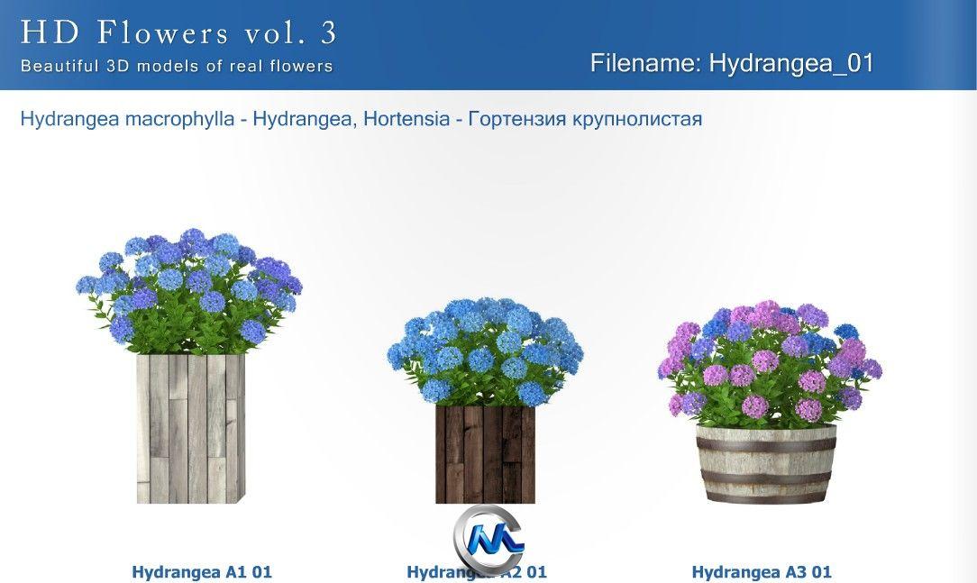 《盆栽植物花3D模型合辑》3dMentor HD Flowers 3