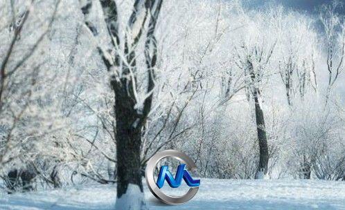 《冬季树木植物3D模型合辑》R&D Group iTrees vol.3 Winter
