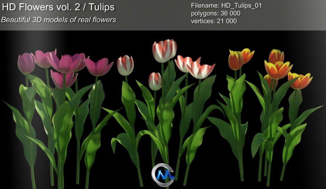 《郁金香花草3D模型合辑》3dMentor HD flowers vol.2 Tulips