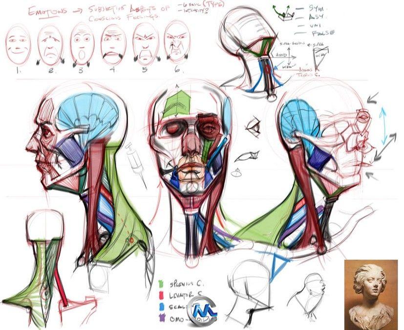 人体绘画大师视频教程合辑 CGMA Analytical Figure Drawing 1 & 2