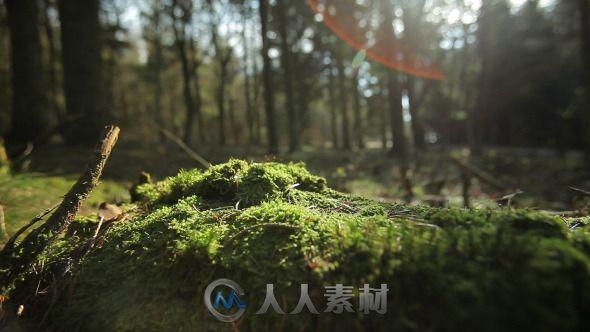 阳光森林下的苔藓高清实拍视频素材 Videohive Forest 4221187 Stock Footage
