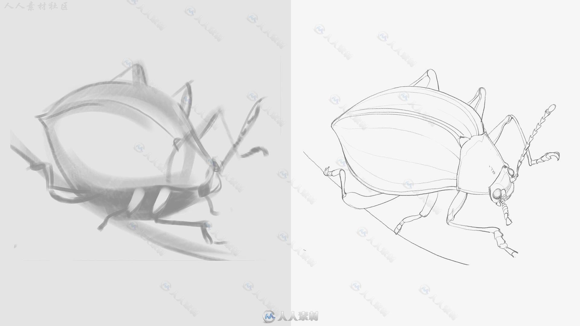 数字绘画素描基础全能大师班训练视频教程 Ctrl Paint Sketching Starter