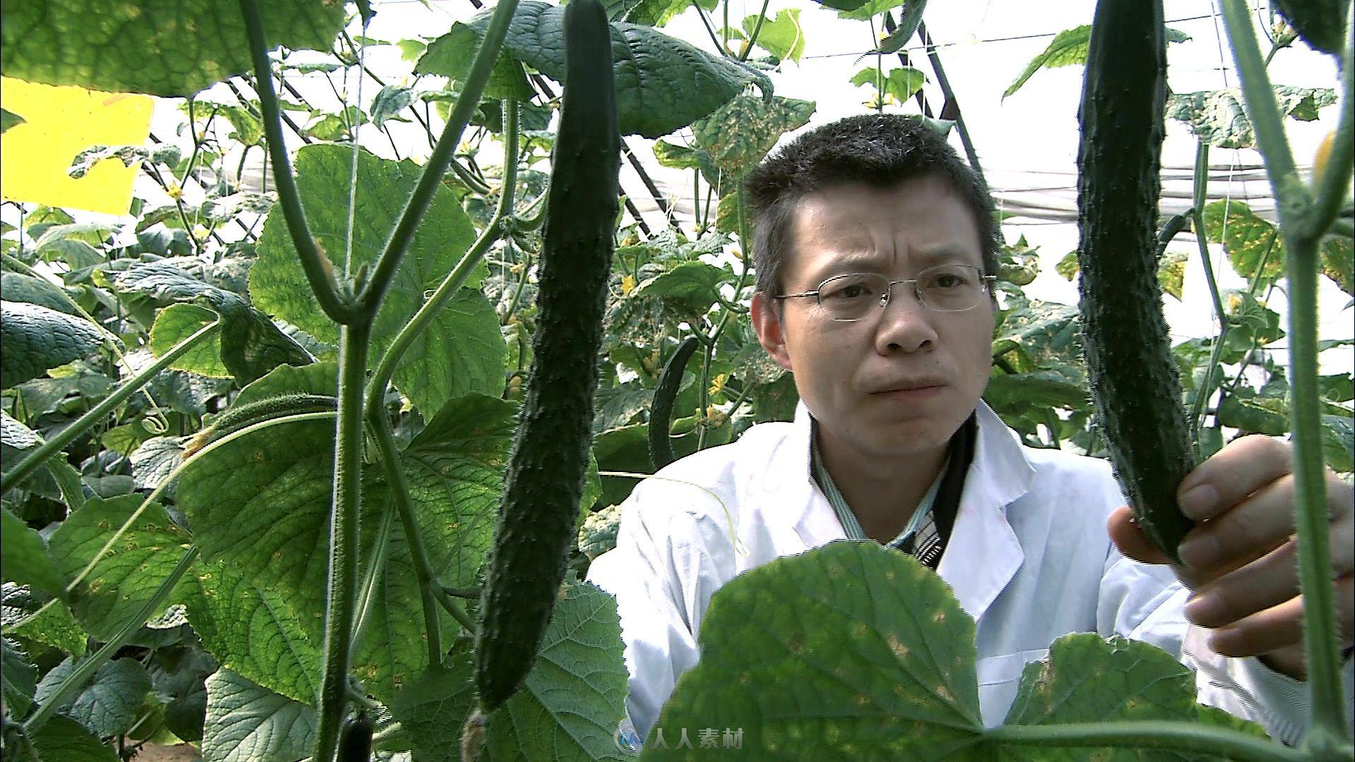 人员玉米查看鞋厂v人员黄瓜苗实拍视频素材-视视频科研图片