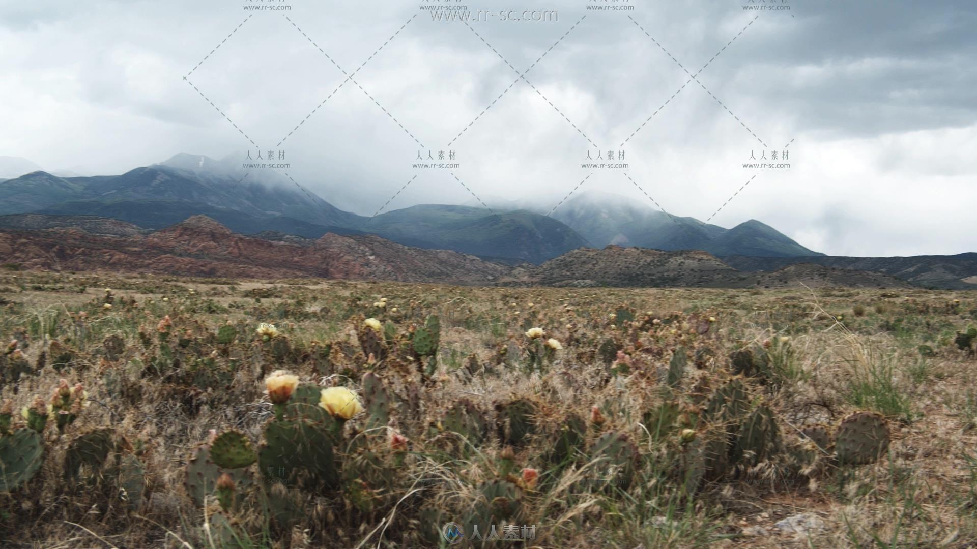 风中的仙人掌自然美景实拍视频素材
