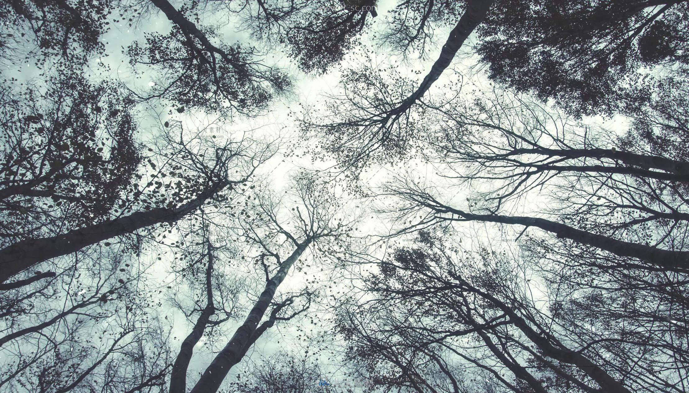 冬季树木仰拍雪花飘落高清实拍视频素材