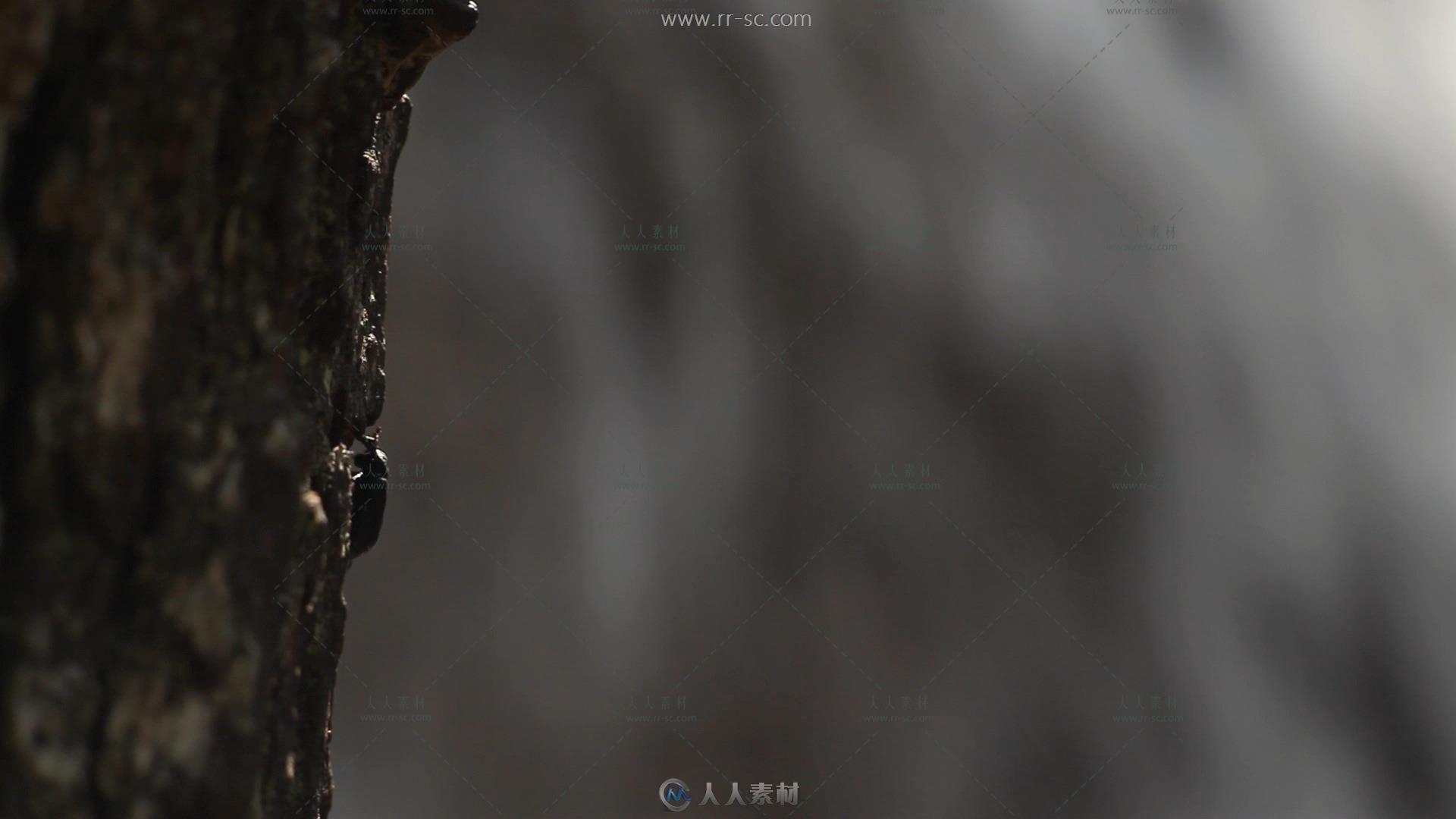 瀑布边缘树上甲虫慢慢爬高清实拍视频素材