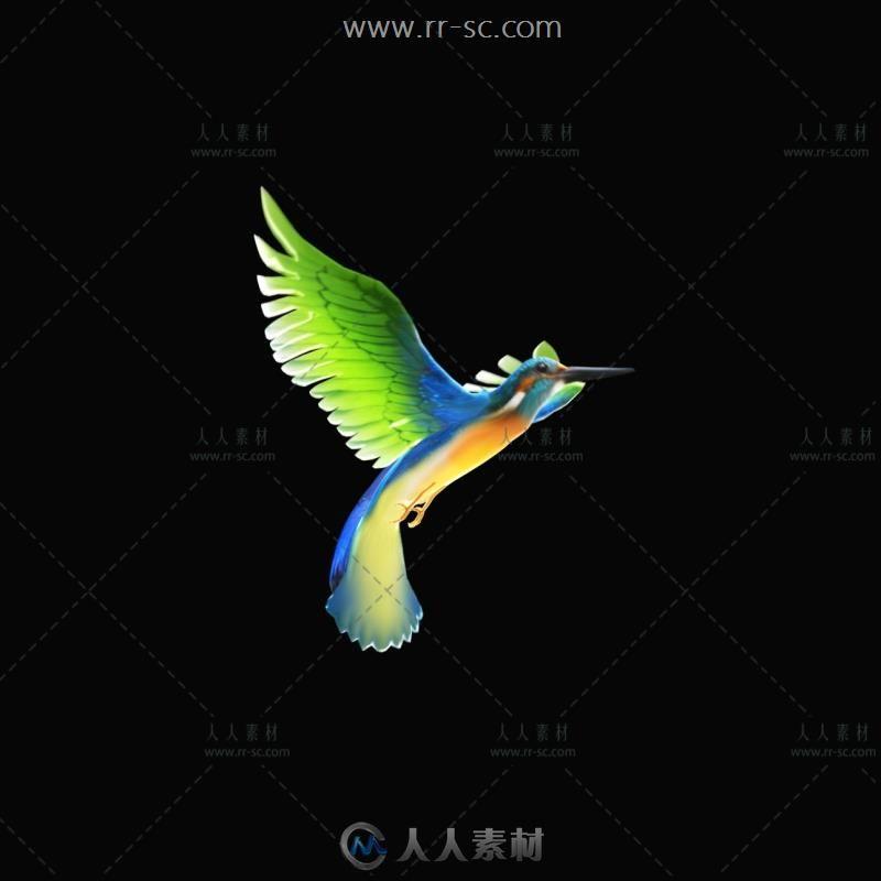 漂亮的多彩飞鸟动态视频素材(带通道)