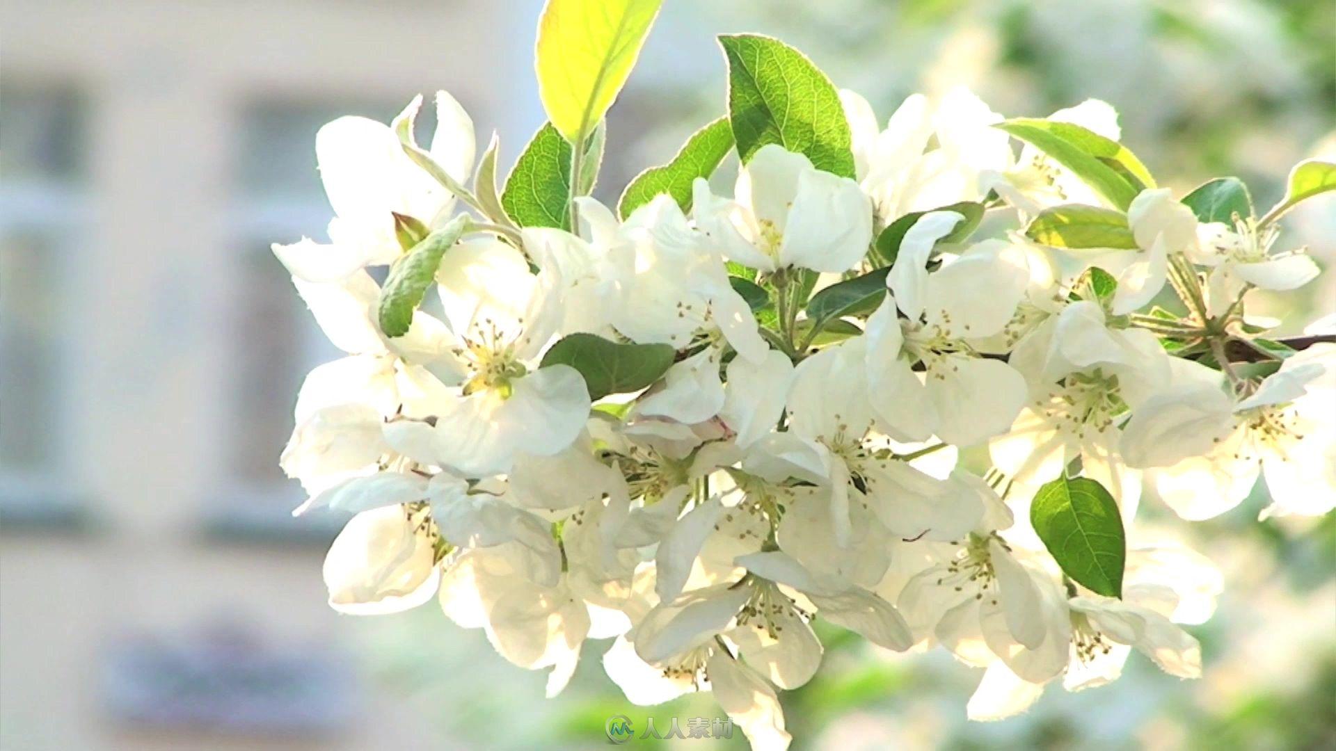 日落时分拍摄树木唯美白花绿叶近距离特写镜头高清实拍视频素材