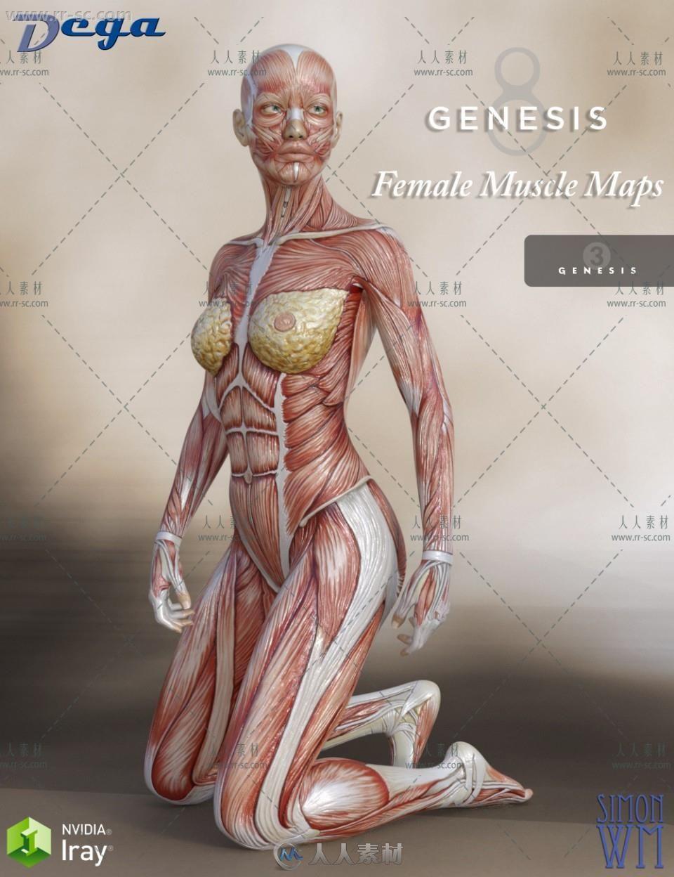 女性肌肉超精细高光贴图映射