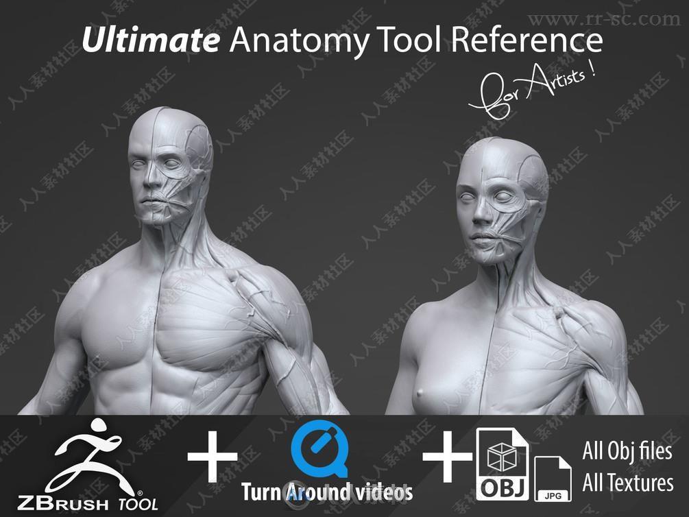 Zbrush超精细男女性肌肉群雕刻解剖3D模型