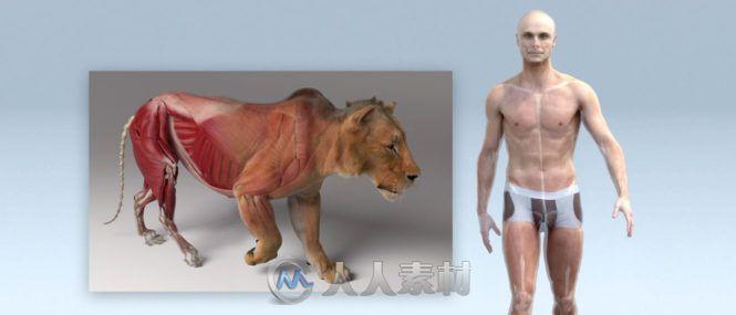 Ziva Dynamics Ziva VFX骨骼肌肉运动模拟Maya插件V1.9版