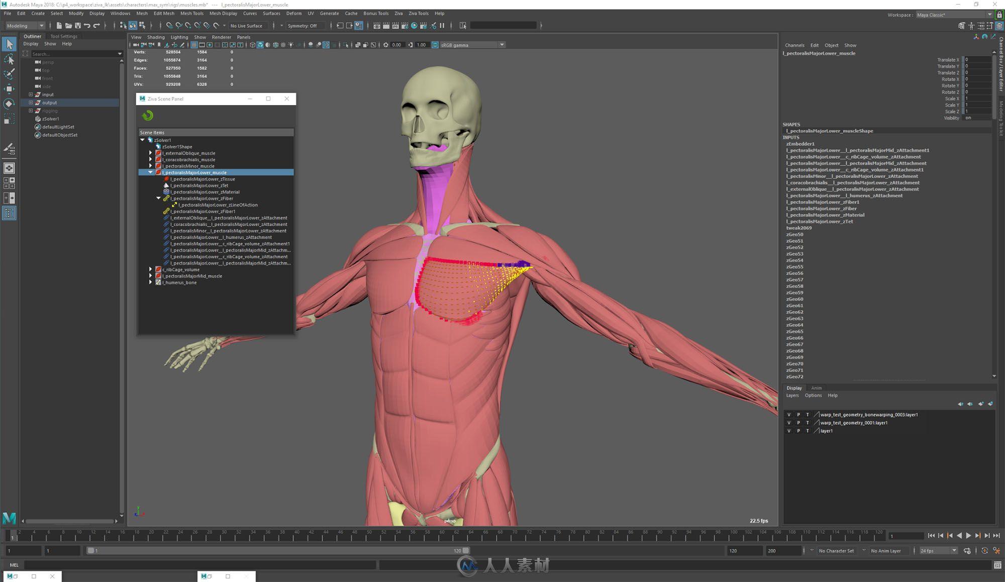 Ziva Dynamics Ziva VFX骨骼肌肉运动模拟Maya插件V1.6版99 / 作者:抱着猫的老鼠 / 帖子ID:16755361,5650261