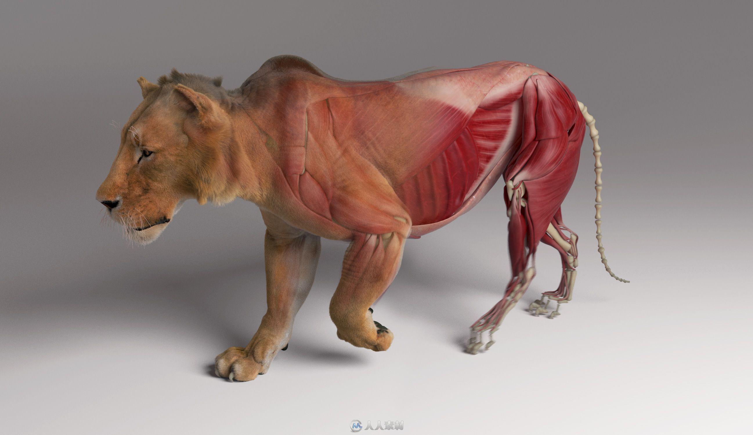 Ziva Dynamics Ziva VFX骨骼肌肉运动模拟Maya插件V1.6版48 / 作者:抱着猫的老鼠 / 帖子ID:16755361,5650261
