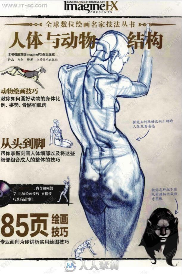 人体解刨绘画法与动物结构教程书籍杂志