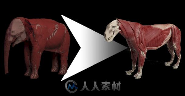 Ziva Dynamics Ziva VFX骨骼肌肉运动模拟Maya插件V1.6版65 / 作者:抱着猫的老鼠 / 帖子ID:16755361,5650261