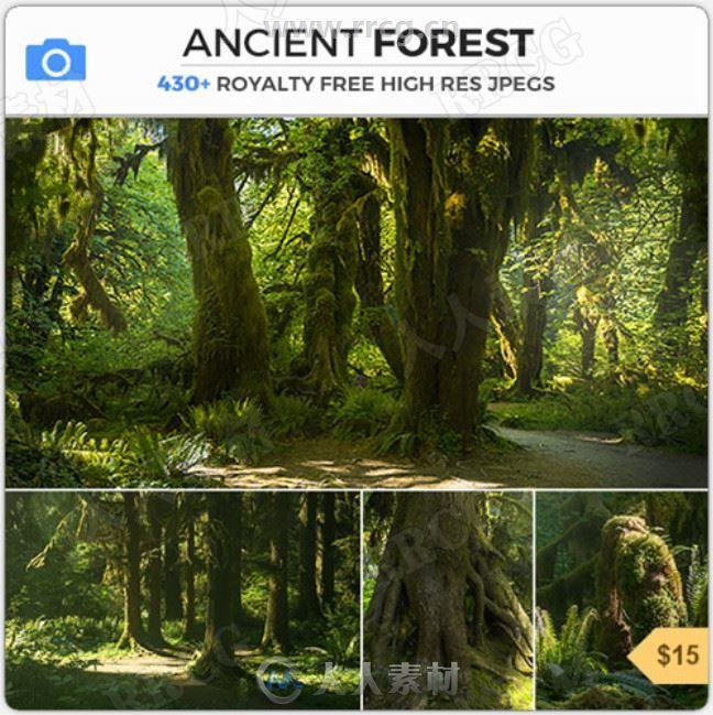 430组古老茂密植被森林雨林高清参考图片合集