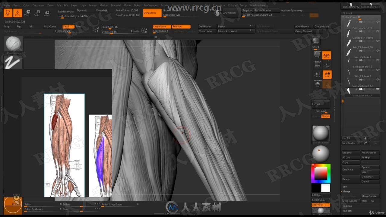 Zbrush女性身体结构肌肉骨骼雕刻剖析视频教程