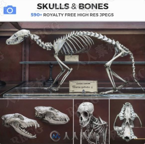 631组动物骨骼解剖结构高清参考图片合集
