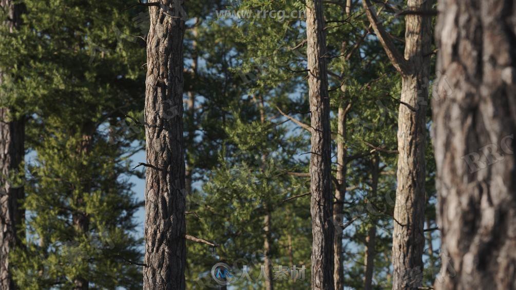 8组高精度逼真松树树木植物3D模型合集