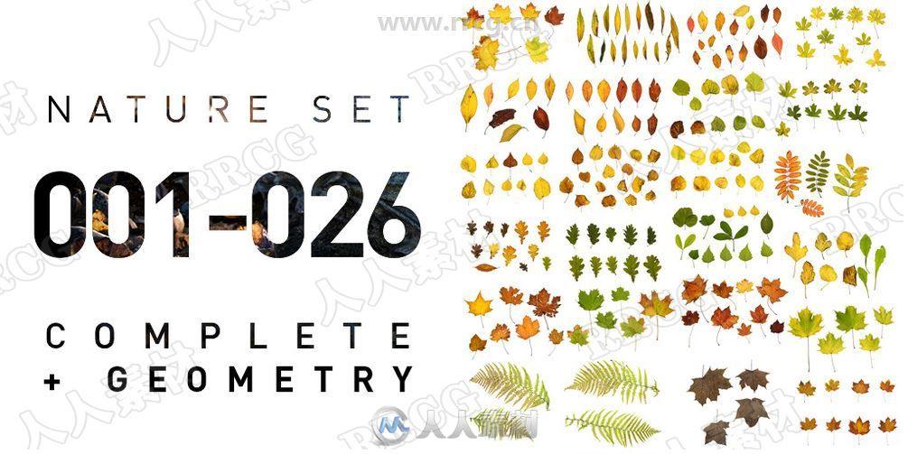 26组照片扫描自然植物树叶4K高精度纹理合集