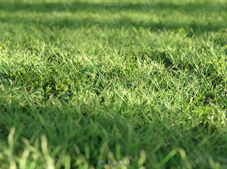 超逼真草地小草绿地3D模型合集