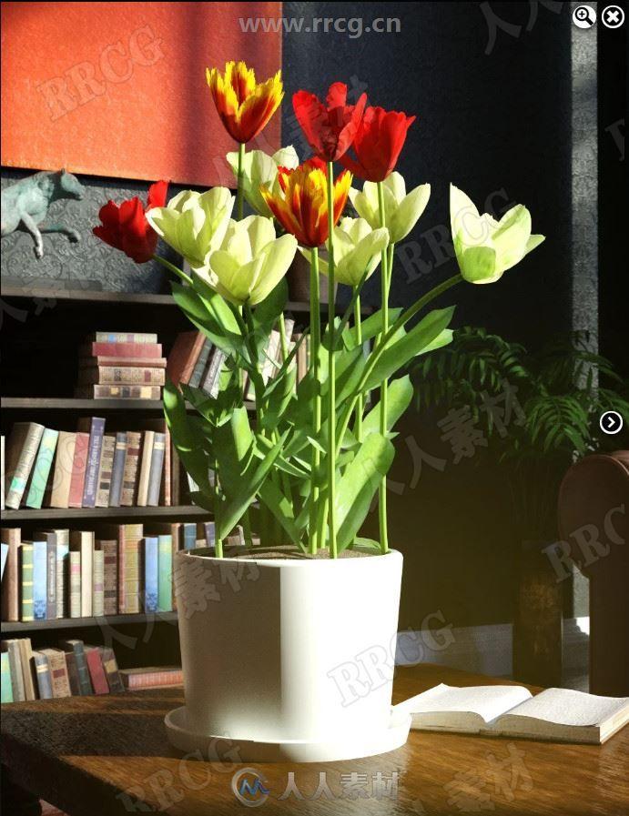 自然植物家居盛开花卉3D模型合集