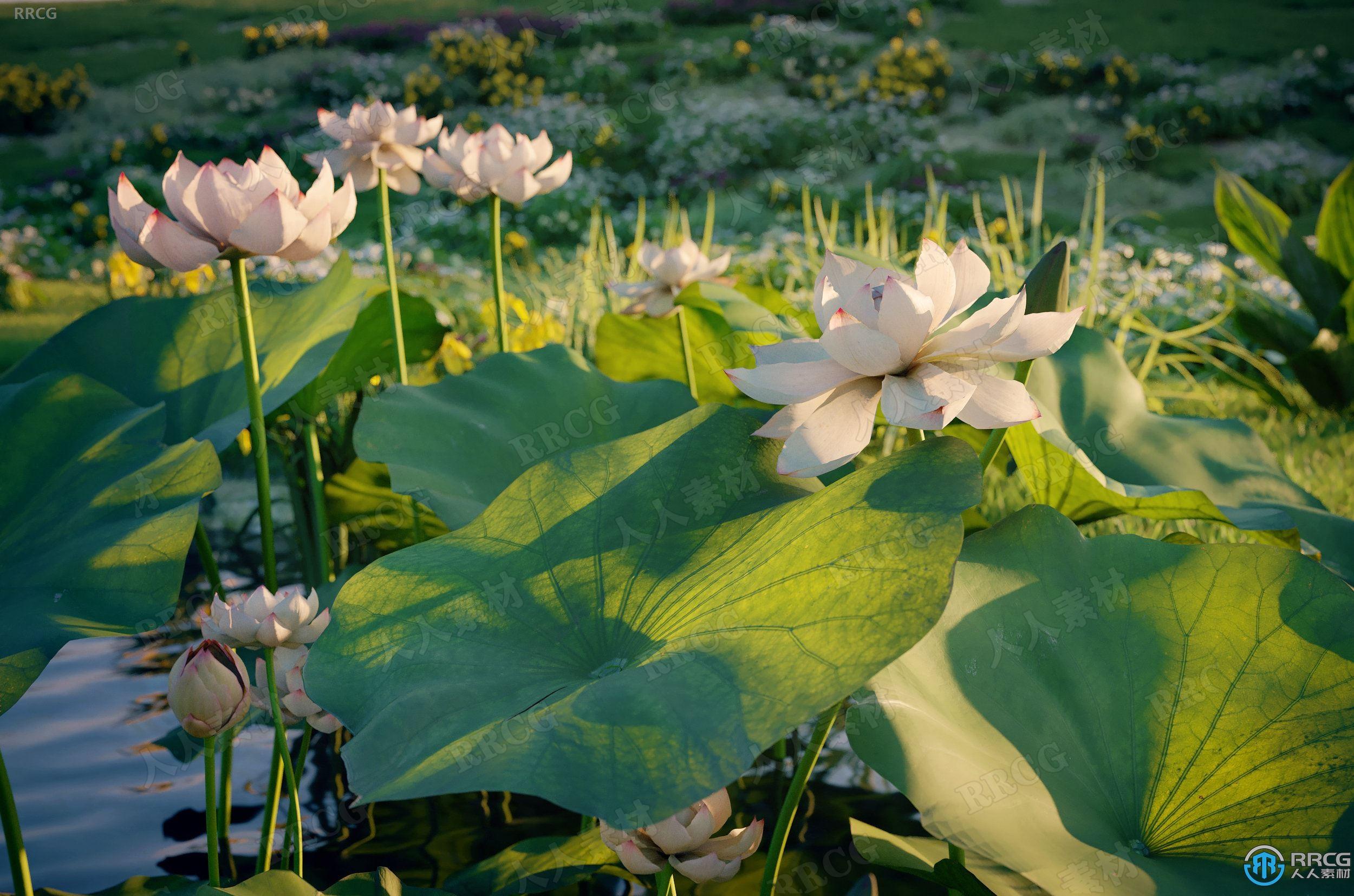 高质量水仙花马鞭草凤尾竹鸢尾花等草木植物3D模型合集