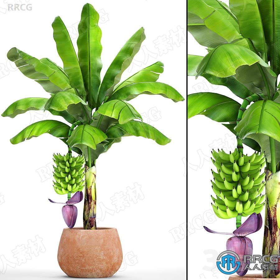 高质量棕榈树与香蕉果实3D模型与贴图