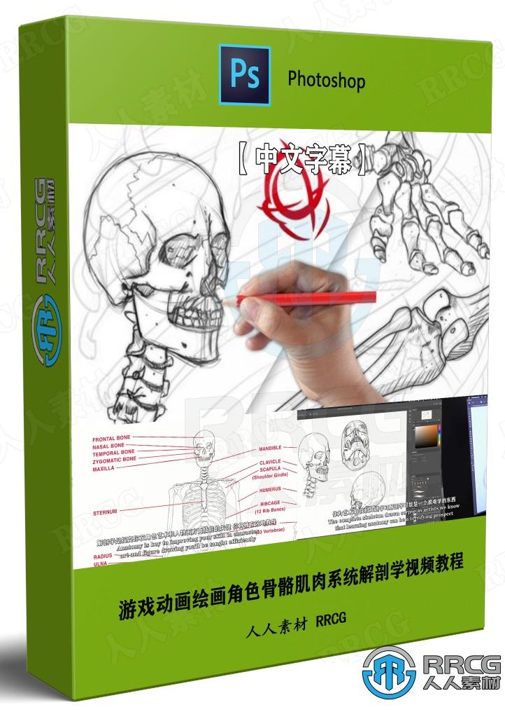 【中文字幕】游戏动画漫画绘画角色骨骼肌肉系统解剖学视频教程
