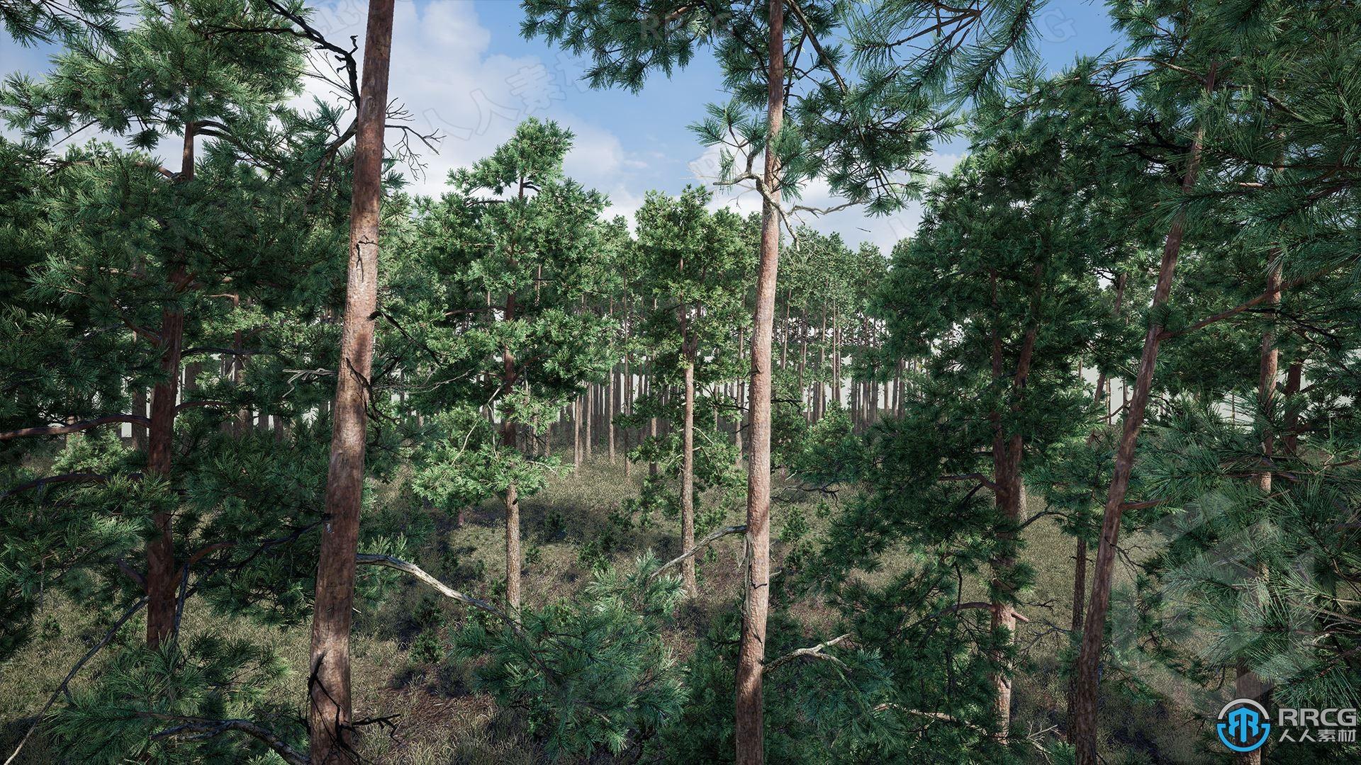 逼真松树植被森林场景Unreal Engine游戏素材资源