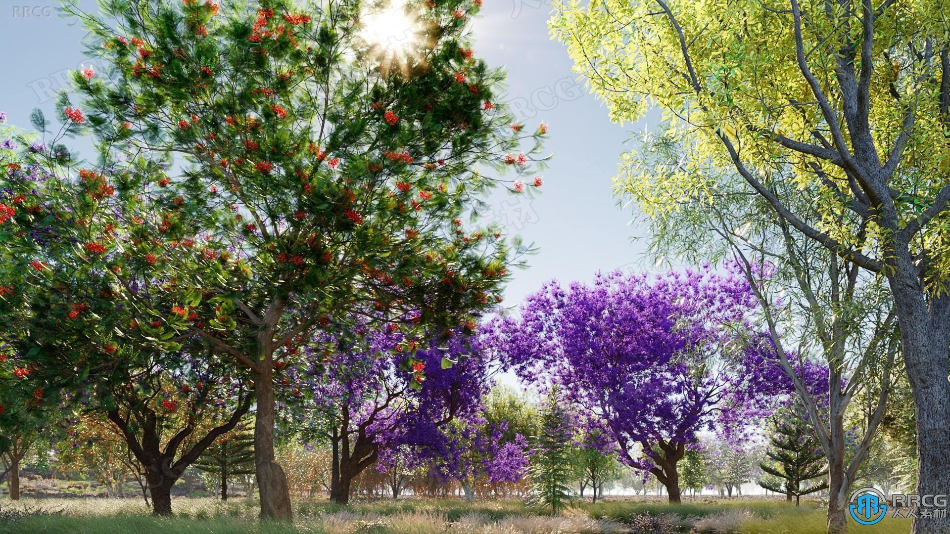 90种大洋洲澳大利亚新西兰高质量树木植物3D模型合集