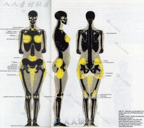 精细的人体结构图解素材