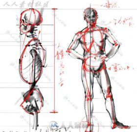 超精细绘画专用人体解剖系列素材