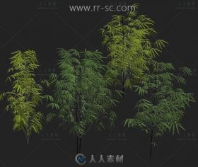 超逼真的几个竹子3D模型