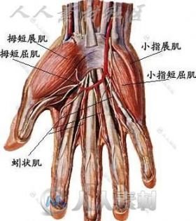 各种动物建模结构 和 骨骼绑定关系的参照